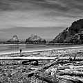 Heceta Head Lighthouse by Lee Santa