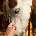 Henna And Pony by Shawna Dockery