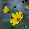 Herb by Adrian Bud