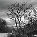 Hermit Island Tree 0192 by Guy Whiteley