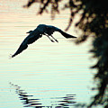 Heron At Dusk by Clayton Bruster