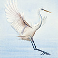 Heron Landing Watercolor by Michelle Wiarda-Constantine