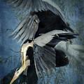 Heron Love  by Saija  Lehtonen