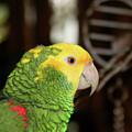 Hey Pretty Birdie by Toni Hopper