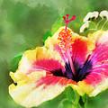 Hibiscus by Francesa Miller
