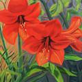 Hibiscus by Jane  Simonson