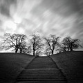 Hill, Stairs And Trees by Peter Levi