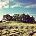 #hills #trees #landscape #beautiful by Samuel Gunnell