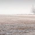 Hoarfrost Pasture by Fred Lassmann