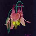 Honeysuckle by Mendy Pedersen