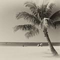 Honolulu Beach by Michael Peychich