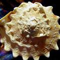 Horned Helmet Shell Top Logarithmic Spiral by Frank Wilson
