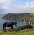 Horse Along Coastal Path Cornwall by Kurt Van Wagner