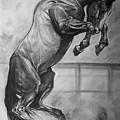 Horse by Desimir Rodic