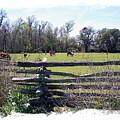 Horse Farm by Ralph  Perdomo