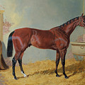 Horse In A Stable by John Frederick Herring Snr
