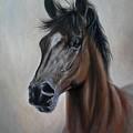 Horse Portrait by Zoltan Simon