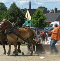 Horse Pull 2 by Melissa Parks