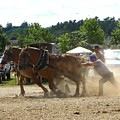 Horse Pulling Team by Melissa Parks