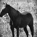 Horse Scope by Debra     Vatalaro