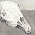 Horse Skull by Mendy Pedersen