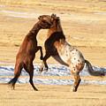 Horseplay by Lauren Munger
