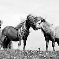 Horses 8 by Stephen Harris