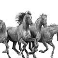 Horses by Bobby Shaw
