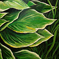 Hostas And Grass Painting by Nancy Mueller