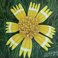 Huisache Daisy by Beverly Fuqua