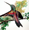 Hummingbird 5 by Karin  Dawn Kelshall- Best