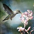 Hummingbird  by Saija  Lehtonen