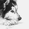 Husky Contemplation by Sheona Hamilton-Grant