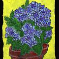 Hydrangea In A Pot by Wayne Potrafka