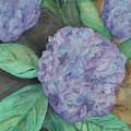 Hydrangea by Sandra Winiasz