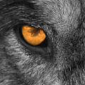 I Am Wolf by Shari Jardina