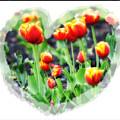 I Heart Tulips by Bill Cannon