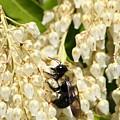 I Work So Hard For The Honey by Paul SEQUENCE Ferguson             sequence dot net