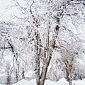 Ice Covered Trees One Painted by Peter J Sucy