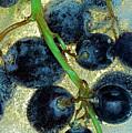 Ice Wine by Michal Boubin
