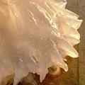 Illuminated Jellyfish by Barbara Palmer