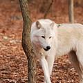 I'm A Wolf by Lori Tambakis