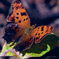 Imperfect Satyr Comma by DigiArt Diaries by Vicky B Fuller