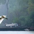 In Flight by Tom Kilbane