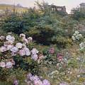 In Full Bloom  by Henry Arthur Bonnefoy