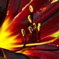 Inner Glow 2 by Ben Upham III