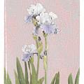 Iris 2 by Inesa Kayuta