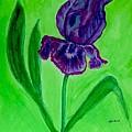 Iris Bloom by Marsha Heiken
