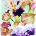Iris Collage by Susan  Lipschutz