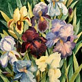 Iris Collection by Marilyn Smith